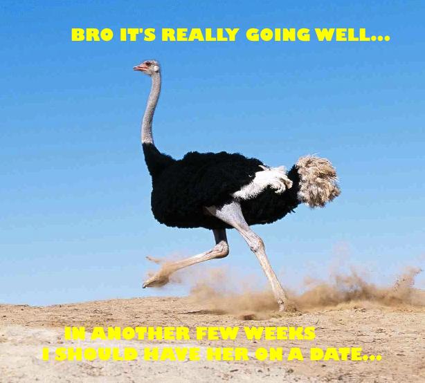 Ostrich Running Away